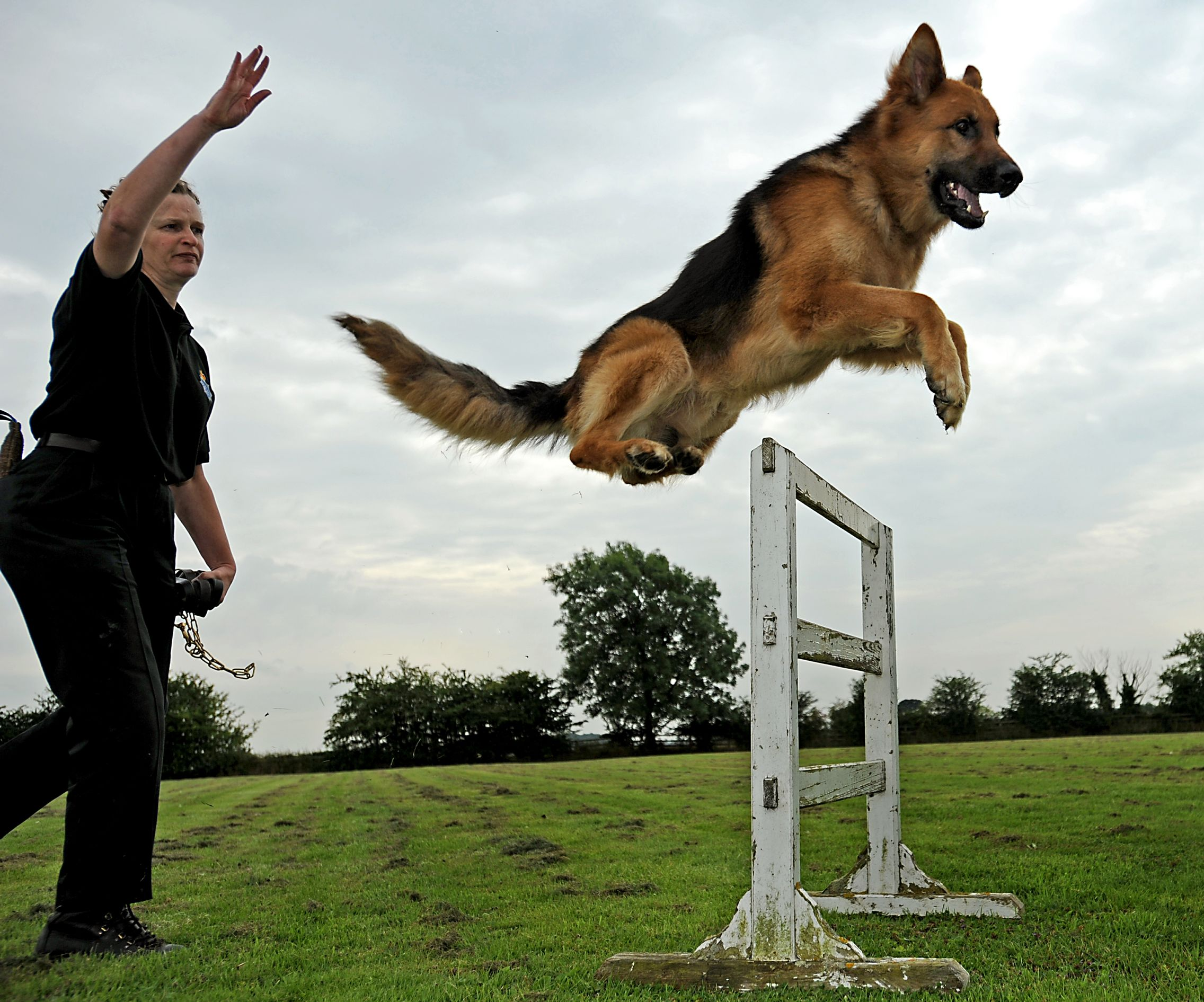 Dog Training Dog Trainer