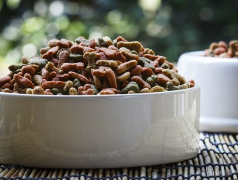 Best Dog Food: Choosing What Right For Your Dog